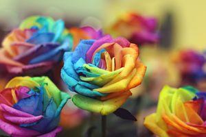 Розы из цветов радуги