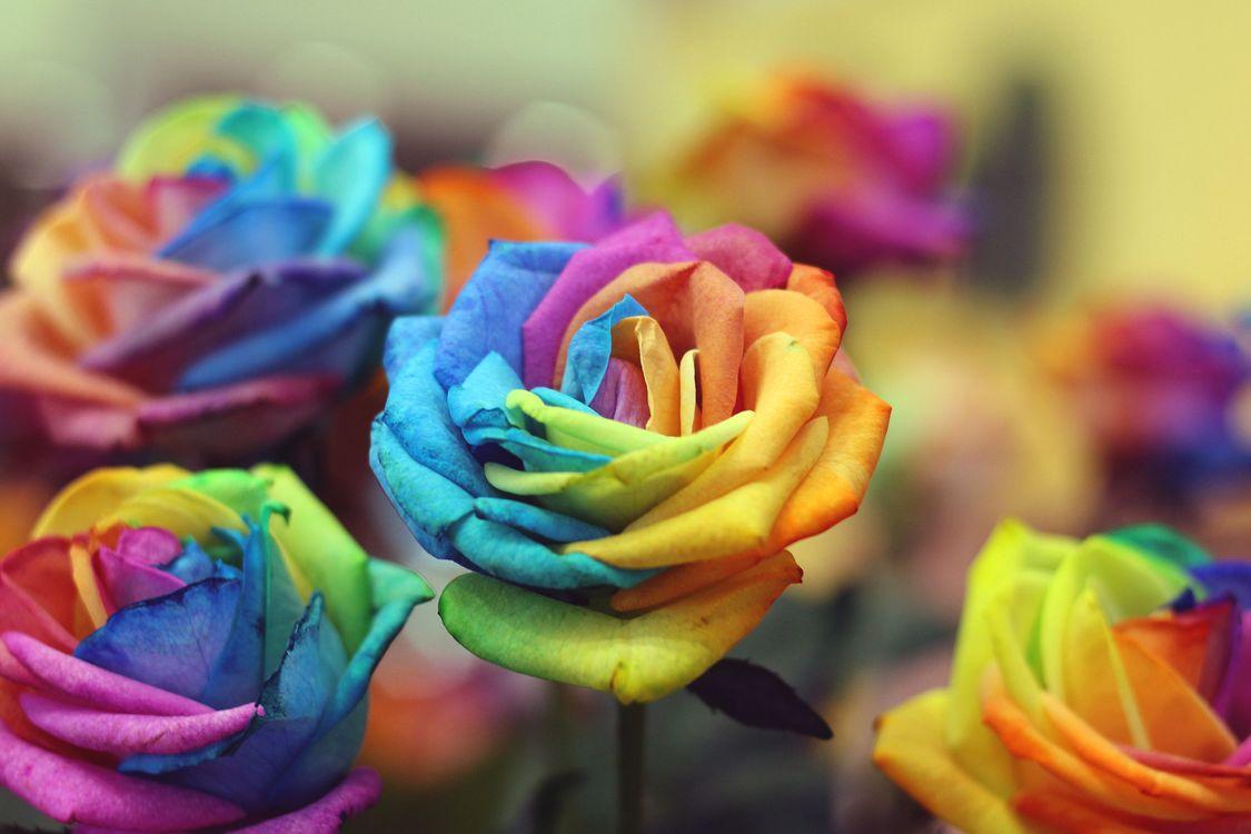 Розы из цветов радуги · бесплатное фото