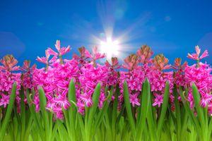 Фото бесплатно весна, цветы, небо