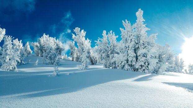 Фото бесплатно пейзаж, сугробы, деревья