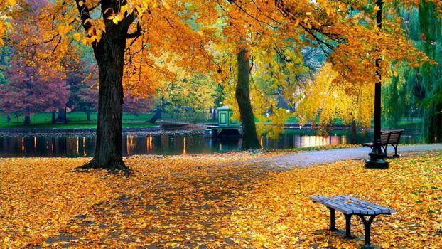 Листопад в парке у ручья · бесплатное фото