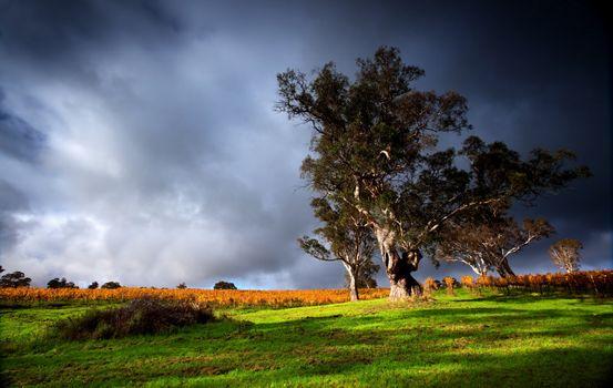 Фото бесплатно облака, грозовые тучи, поле