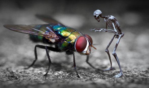 Фото бесплатно фантазия, покупать, скелет