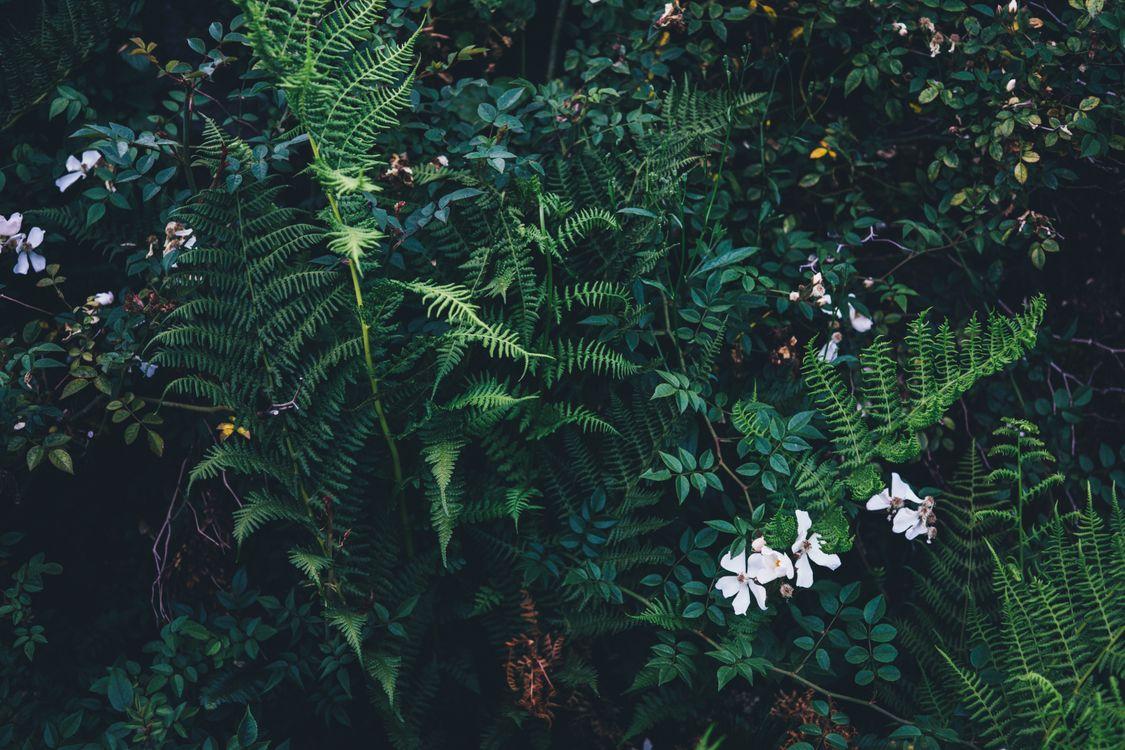 Обои лес, филиал, растение картинки на телефон