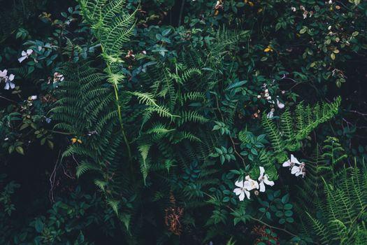 Фото бесплатно лес, филиал, растение