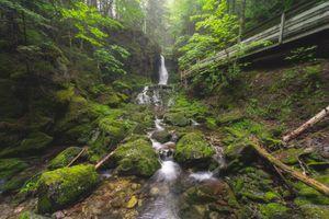 Фото бесплатно National Park of Canada, лес, речка