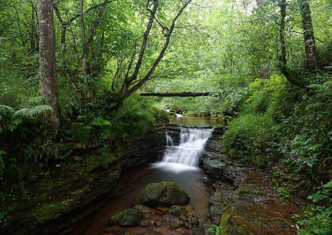Фото бесплатно природа, скалы, лес - на рабочий стол