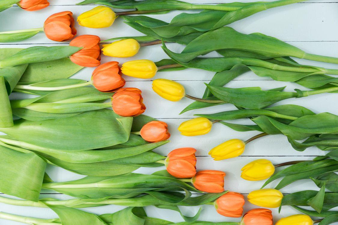 Фото бесплатно декор, цветы, тюльпаны, желтые, красные, перфекционизм - на рабочий стол