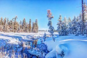 Фото бесплатно Harriman State Park, Айдахо, зима
