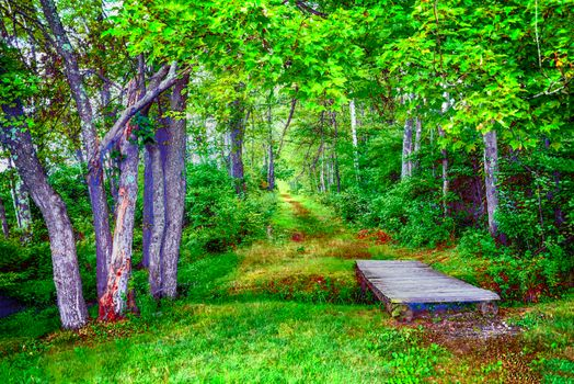 Photo free nature, Creek, trees