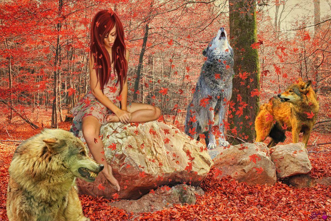 девушка с волками · бесплатное фото
