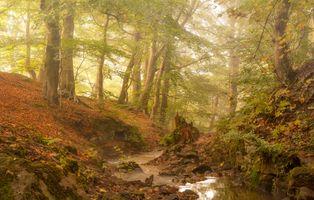 Фото бесплатно осень, лес, деревья, речка, туман, камни, осенние листья, природа, пейзаж