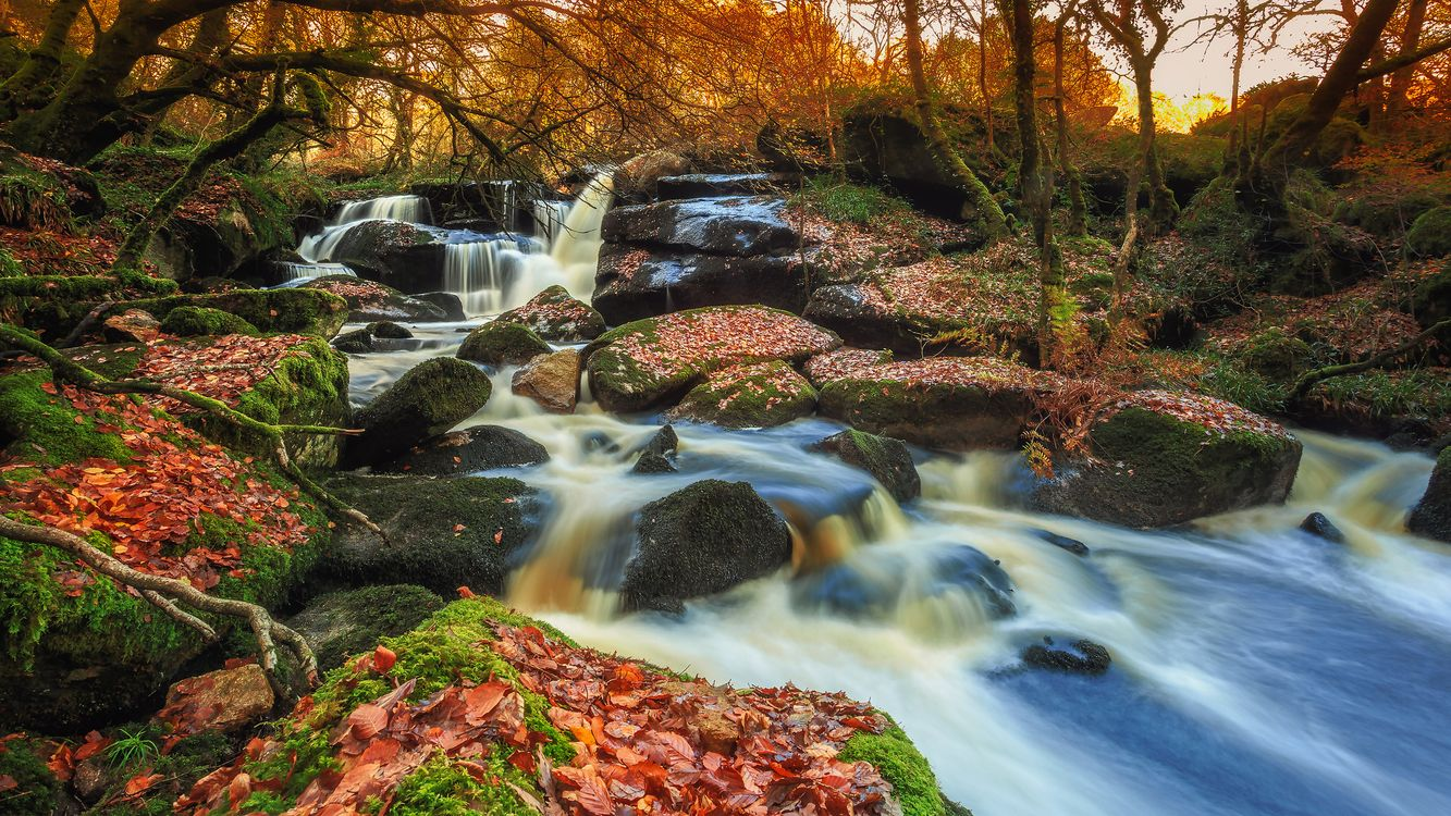 Обои лес, франция, водопад картинки на телефон