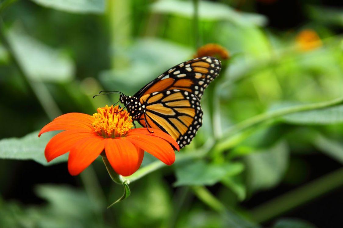 Фото бабочка растение цветок - бесплатные картинки на Fonwall