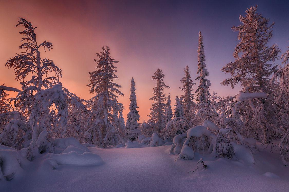 Зимняя тундра · бесплатное фото