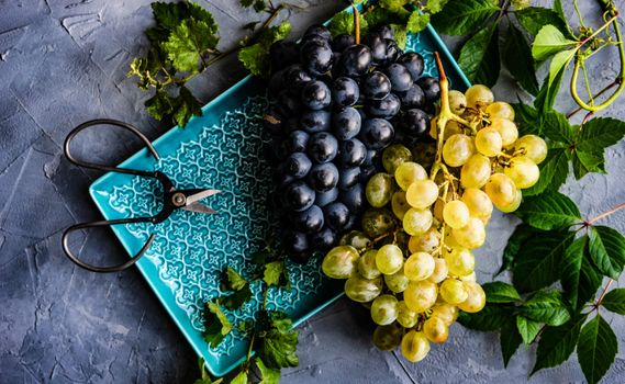 Bunches of grapes and scissors · free photo