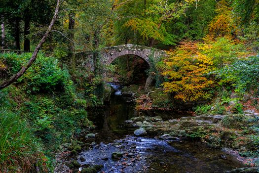 Photo free forest, fall colors, river