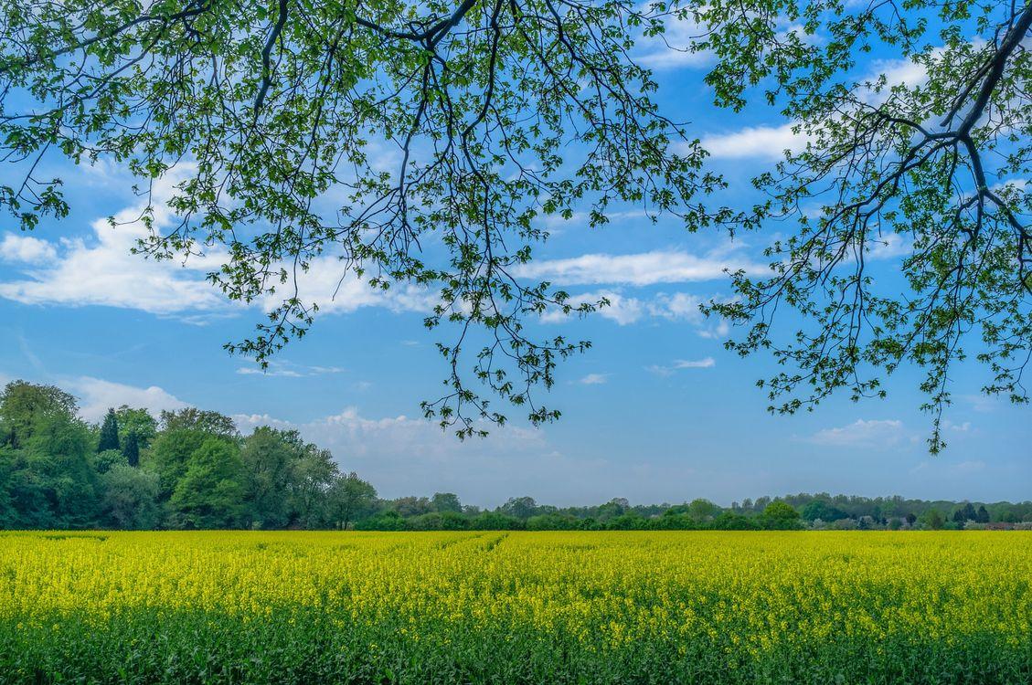 Фото бесплатно поле, цветы, весна - на рабочий стол