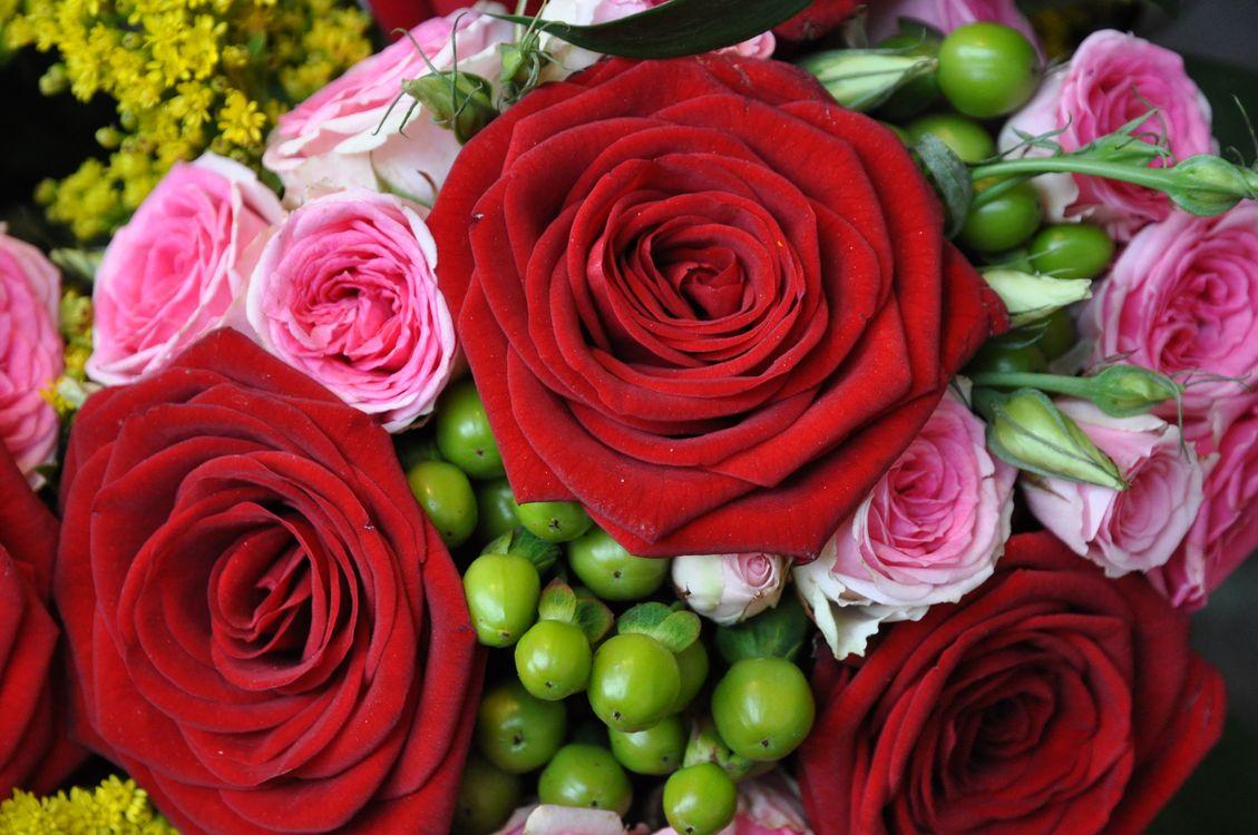 Цветы розы · бесплатное фото