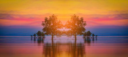 Бесплатные фото Силуэт дерева,море,закат,Силуэт дерева в море на фоне заката,панорама