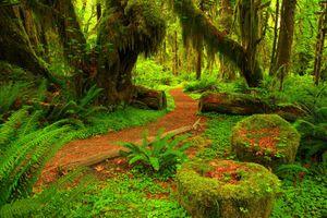 Фото бесплатно мшистый лес, пейзаж, природа