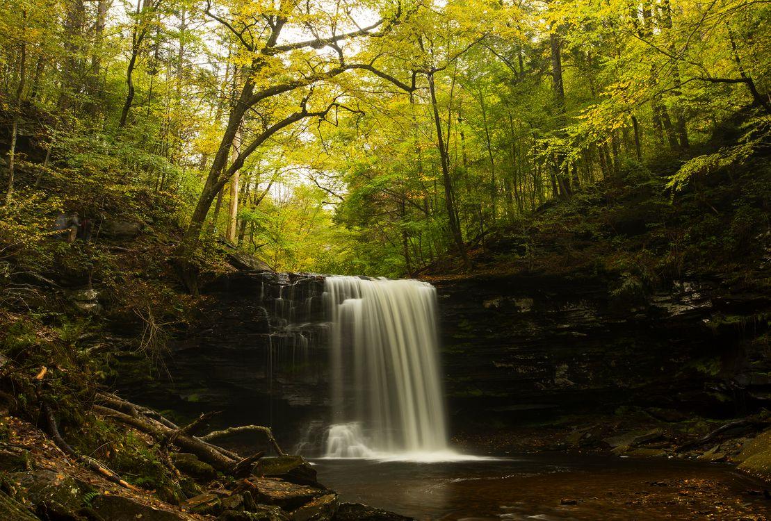 Водопад в лесу · бесплатная заставка