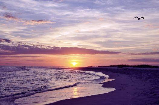 Фото бесплатно побережье, пляж, чайки