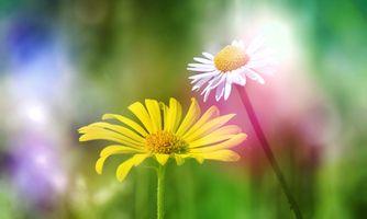 Photo free flowers, daisies, plants