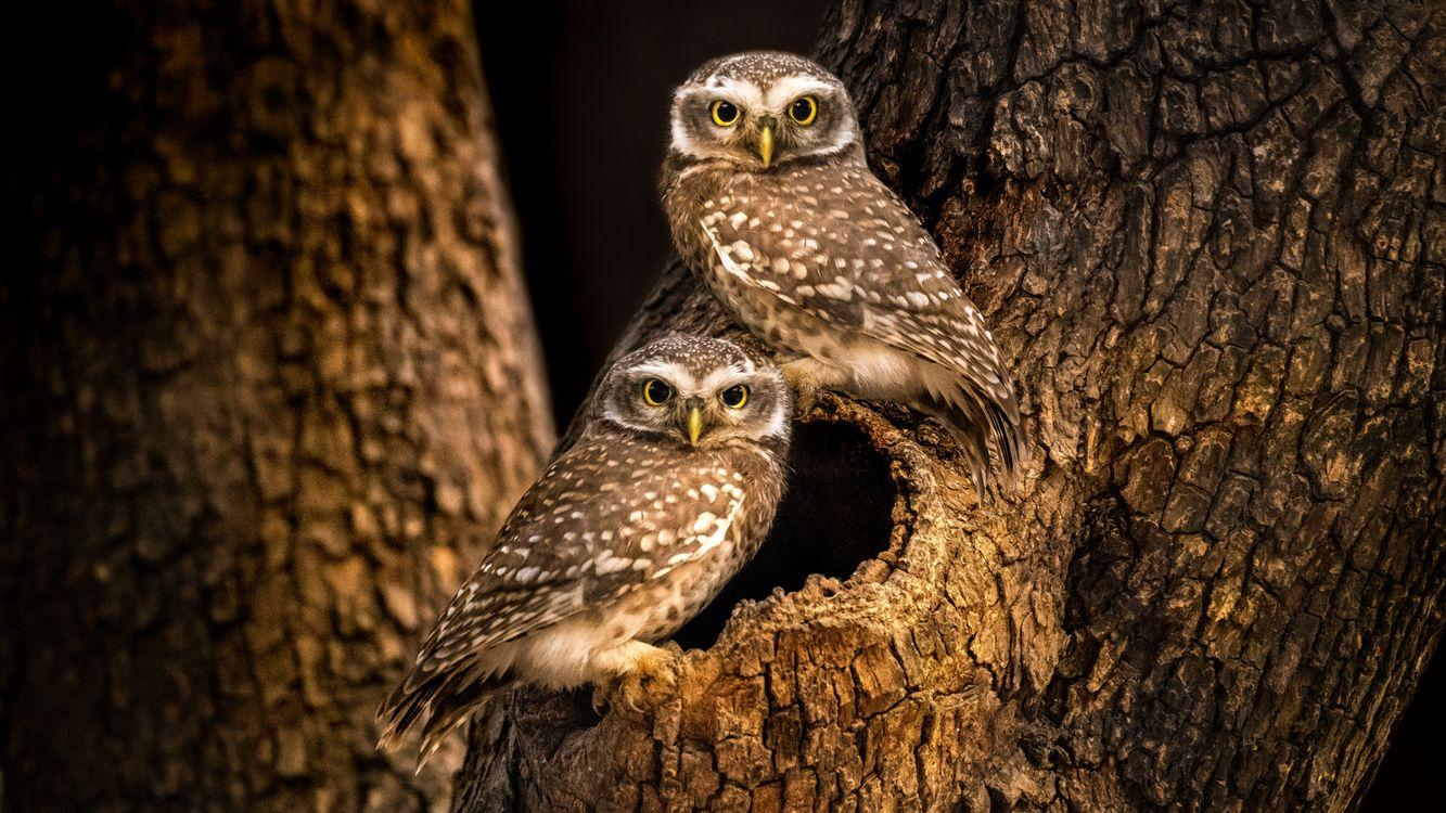 Обои дерево, совы, сова, дупло, ночь, природа на телефон | картинки птицы