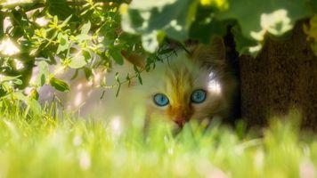 Котёнок прячется в тени