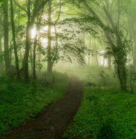 Бесплатные фото лес,деревья,тропинка,туман,природа,пейзаж