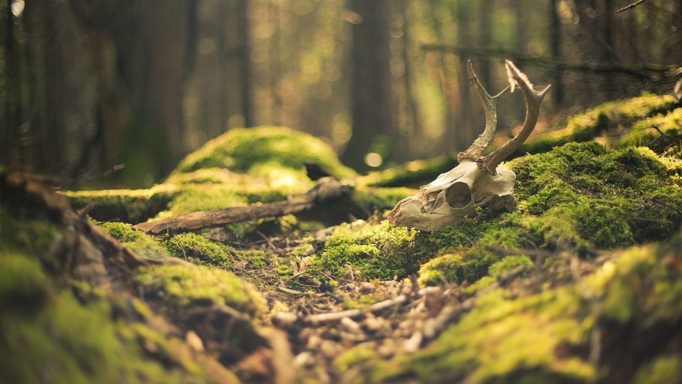 Фото бесплатно мох, лес, земля - на рабочий стол