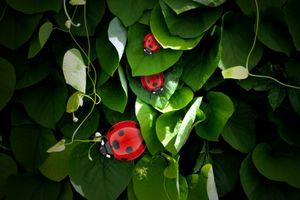 Бесплатные фото растение,божья коровка,макро,насекомое,зелёный
