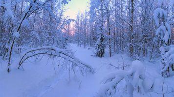 Фото бесплатно снег, следы, лес