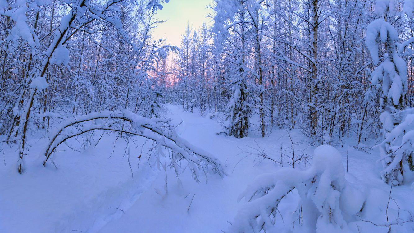 Фото бесплатно снег следы лес - на рабочий стол