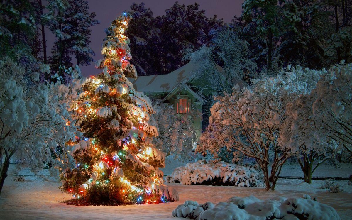 Фото бесплатно нарядная елка, двор, домик - на рабочий стол