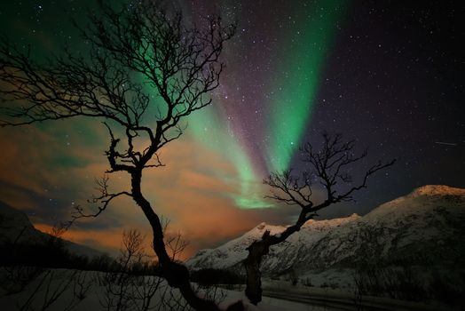 Photo free tree, mountains, landscapes