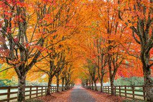 Фото бесплатно осенние краски, аллея, осень