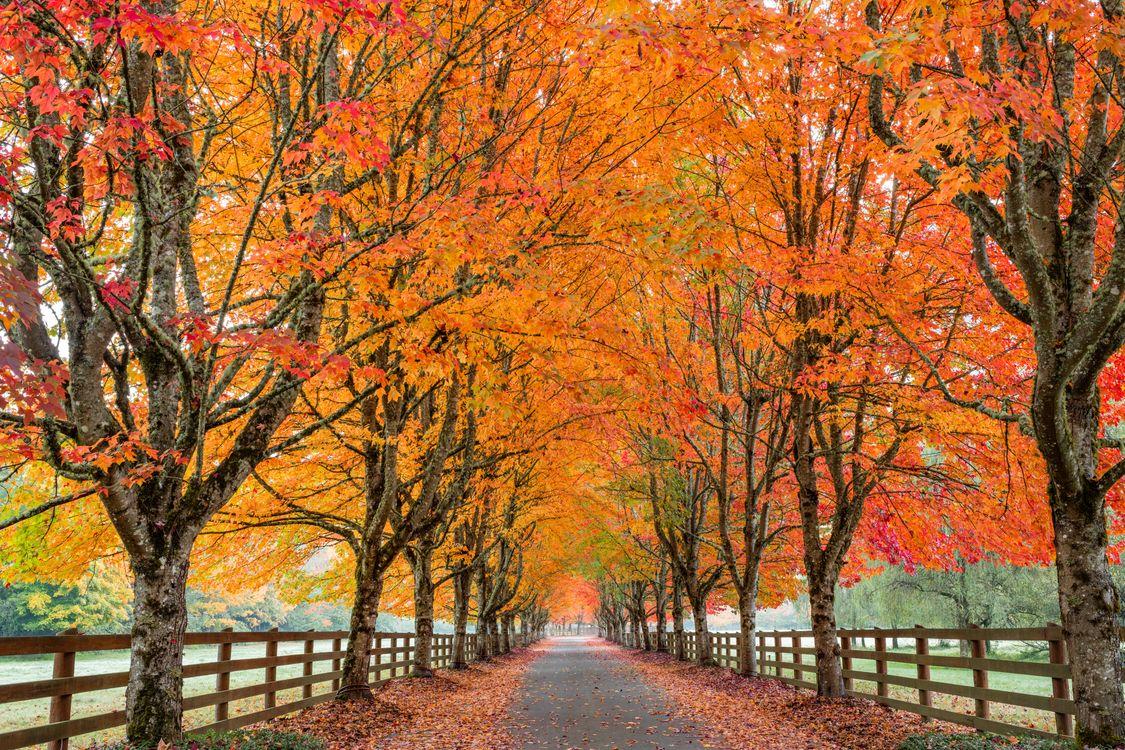 Фото бесплатно осенние краски, аллея, осень - на рабочий стол