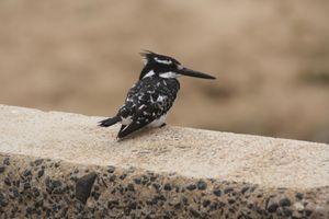 Фото бесплатно черная птица, длинный клюв, стоя