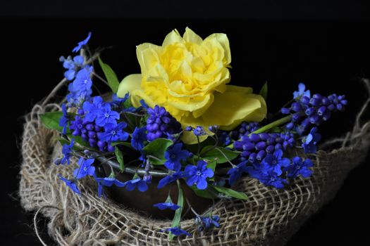 Photo free spring flowers, background image, still life