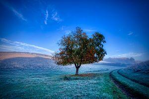 Фото бесплатно пейзаж, дорога, мороз