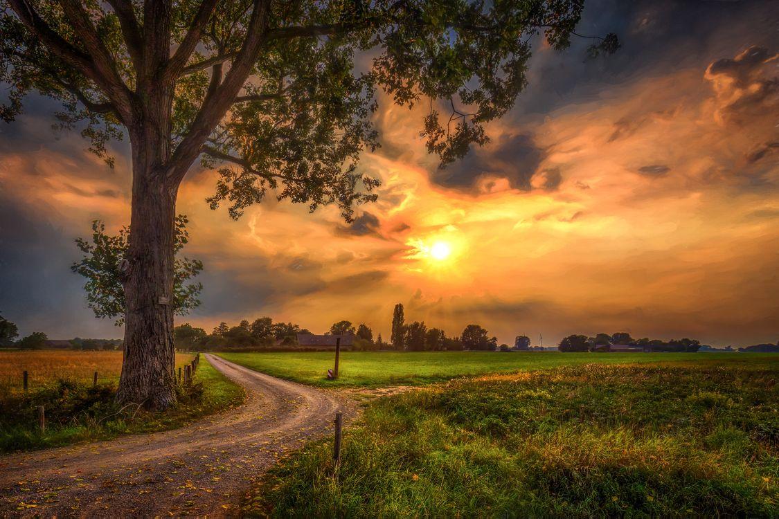Фото бесплатно деревья, пейзаж, солнце - на рабочий стол