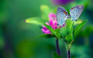 Фото бесплатно фон, бабочка, цветок