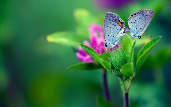 Photo free background, butterfly, flower