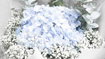 Фото бесплатно белый, синий, цветы