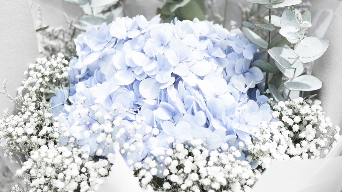 Free photo flowers, bouquet, blue - to desktop