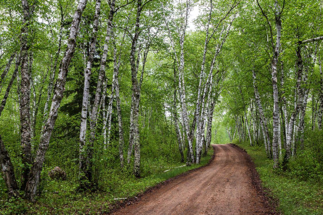 Обои лес, деревья, дорога, берёзы, природа, пейзаж на телефон | картинки пейзажи