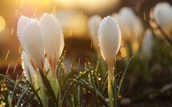 Заставки цветы белые, макро, живописный