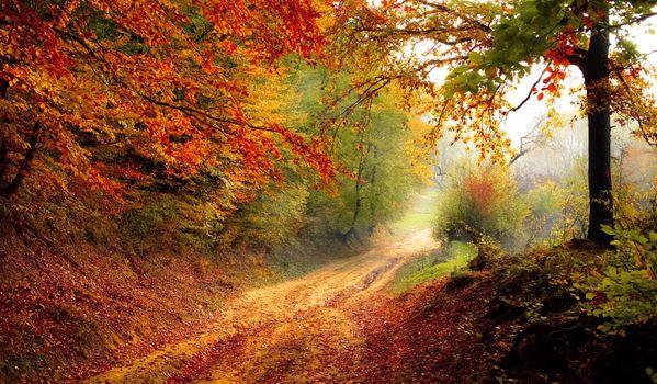 Бесплатные фото пейзаж,дерево,природа,лес,легкий,растение,дорога,солнечный лучик,утро,лист,падать,земельные участки